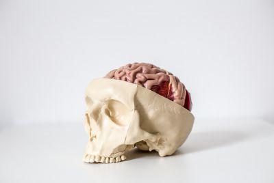 Heilpraktikerschule Tegernsee - Galerie - Anatomie